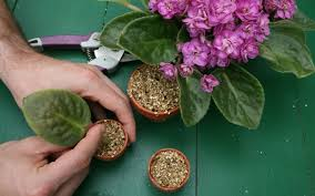 how to save money and propagate your own plants