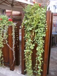 vertical wall garden eden makers blog by shirley bovshow