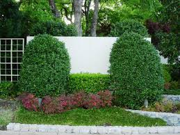 Fake Bushes Modern Common Landscaping Plants Pictures Ideas Design Ideas