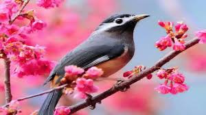 bird wallpapers beautiful birds wallpapers youtube