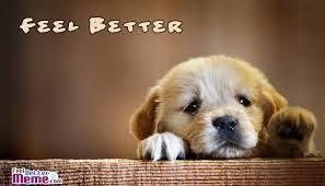 Meme Get Well Soon - get well soon puppy meme mne vse pohuj