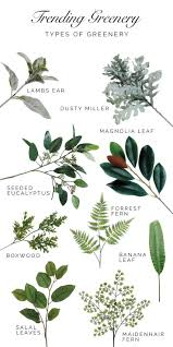 Home Decor A Sunset Design Guide A Guide To Trending Greenery Types Of Greenery That Are Trending