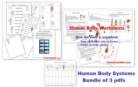 human body worksheets cells tissues organs and the human body