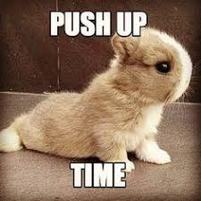 Bunny Meme - pin by kathleen daily on rabbits pinterest rabbit and funny rabbit