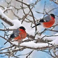 birds in our garden tushita 2018 wall calendar 9783960132967