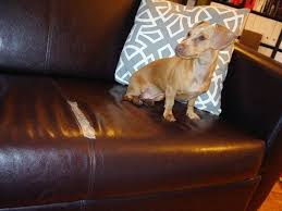 Leather Sofa And Dogs Best Leather Sofa With Dogs Ezhandui