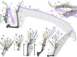 pterosaur wings