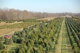 christmas tree farmers christmas lights decoration