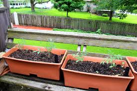 container garden tomatoes how to keep them productive and manage