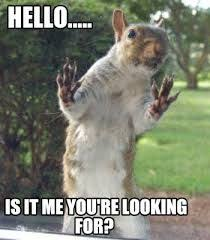 Dramatic Squirrel Meme - dramatic squirrel is dramatic squirrel meme and humor