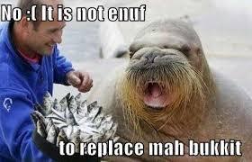 Meme Bucket - walrus meme bucket google search funny pinterest meme