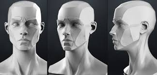 Female Anatomy Figure Planes Of The Head Female 3d Model Anatomy Planes And 3d