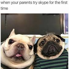 Smile Memes - happy dog memes that will make you smile from ear to ear the tango