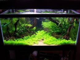 cuisine adventures in aquascaping aquascape designs tanks