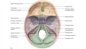 Parts Of Ethmoid Bone Cranial Bones Unity Companies Rr Of Nursing