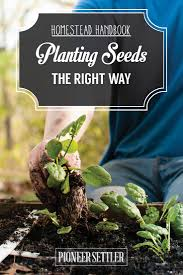 planting seeds in your backyard garden homesteading 101