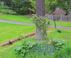 mini orchard apple pear u0026 plum trees blueberries u0026 rhubarb