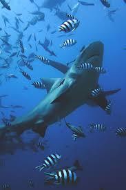 1160 best sea creatures images on pinterest ocean life under