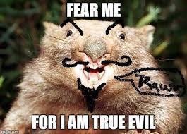 Wombat Memes - evil wombat imgflip