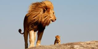 This Is The Lion King S Simba And Mufasa In Real Life Photo Mufasa King