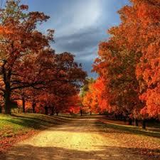 fall foliage 2017 u0026 nationwide peak leaf forecast