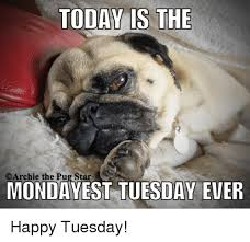 Happy Tuesday Meme - today is the archie the pug star monday est day ever happy tuesday
