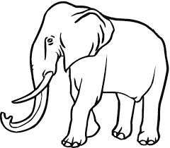 majestic elephant coloring color book
