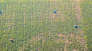 Pumpkin Patch Near Dixon Ca by Lost In Huge Sacramento Area Corn Maze Worried Citizens Call 911