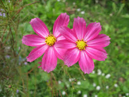 A Garden Of Flowers by Aster Patience Daintiness Contentment September Birth Flower