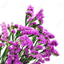statice flowers bouquet from purple statice flowers isolated on white background