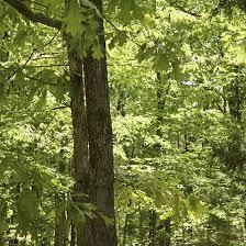Arkansas nature activities images Children 39 s activities in rogers arkansas usa today jpg