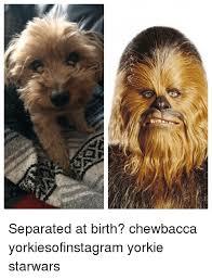 Chewbacca Memes - separated at birth chewbacca yorkiesofinstagram yorkie starwars