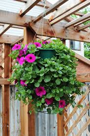 Beautiful Window Boxes How To Plant A Professional Looking Hanging Flower Basket