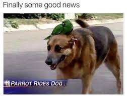 Good News Meme - finally some good news parrot rides dog meme on me me