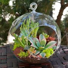 Glass Globes For Garden Succulent Terrarium Ball Hanging Glass Ball Terrariums Simply