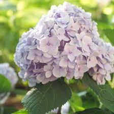 All Year Flowering Shrubs - 37 best flowering shrubs images on pinterest flowering shrubs