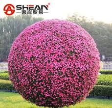 petunia tree suppliers best petunia tree manufacturers china