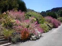 Uc Berkeley Botanical Gardens Of California Botanical Garden At Berkeley