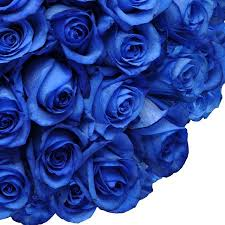 Blue Roses Natural Fresh Flowers Tinted Blue Roses 20