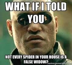 Spider Meme Misunderstood Spider Meme - i spied a spider but which spider have i spied eh a false widow