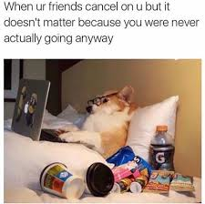 Dog In Bed Meme - dog in bed on laptop with snacks justpost virtually entertaining