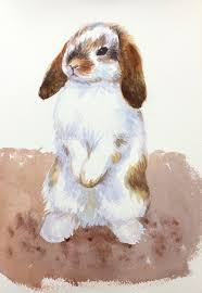 step by step animal portrait of a cute holland lop