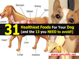 31 healthiest foods for your dog and the 13 you need to avoid