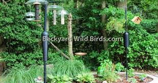 Backyard Wild Birds Backyard Wild Birds Blog Backyard Landscaping Ideas