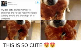 Cute Christmas Meme - tereza tyftharry my dog got a stuffed monkey for christmas and he s