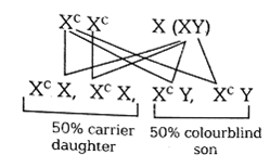 Colour Blind Percentage A Man Whose Father Was Colour Blind Marries A Woman Who Had A
