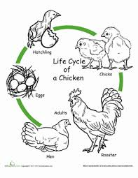 animal cycle coloring pages education