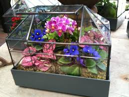 mini greenhouse complete with mini orchid and violets roger u0027s