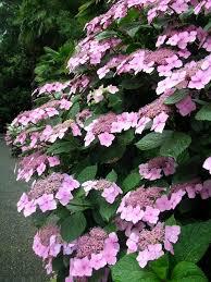 immagini di giardini fioriti parchi ville e giardini fioriti visita guidata nel