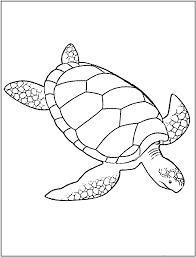 sea turtle outline clip art 56